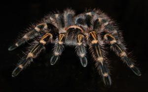 Spinnen sind nicht für Jedermann leicht anzusehen