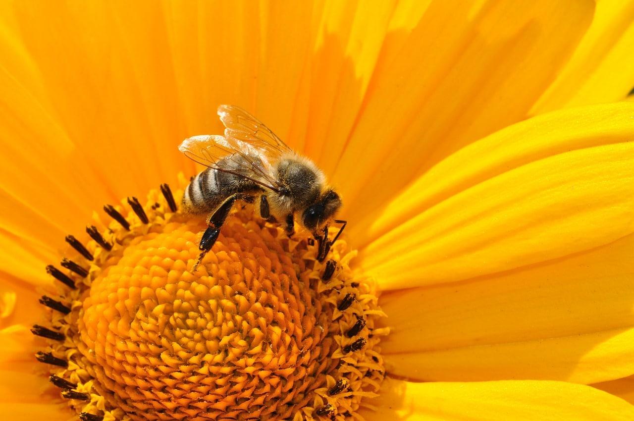 Von Bienen können wir einiges lernen! Was genau ihr euch für euer Business von ihnen abschauen könnt, erfahrt ihr in meinem Fundstück.