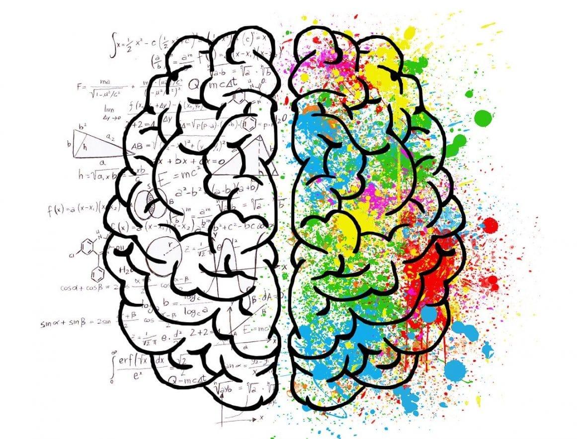 Rechte und linke Gehirnhälfte Kreativität