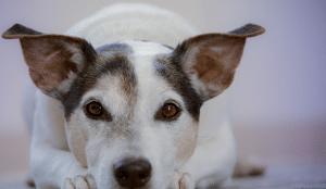 Haustiervermittlung über eine Dating-App? Das Tierheim München probiert es aus!